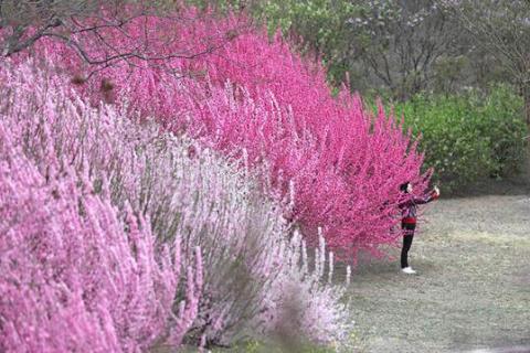 圆明园踏春节开幕,将一直持续至5月1