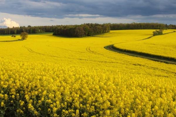 研究发型啊全球气候变暖导致粮食危机加重