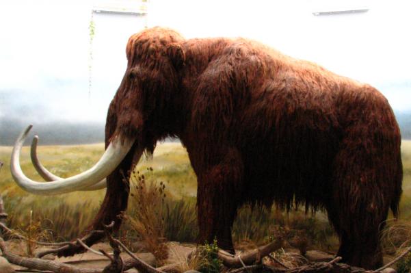 科学家欲通过克隆技术实现复活已经灭绝的动物