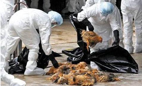 台湾发现H5N2禽流感 人如何有效预防感染禽流感?